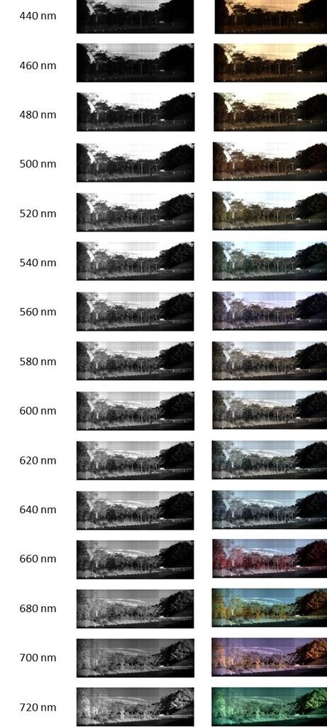 分光イメージングカメラ解析 ハイパースペクトルカメラ解析 波長微分表示方法